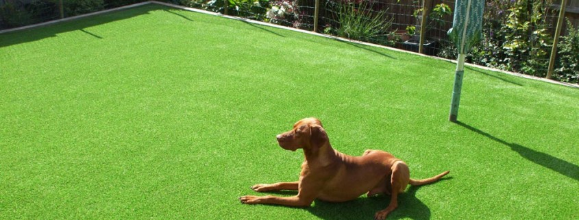 artificial grass is great for pets