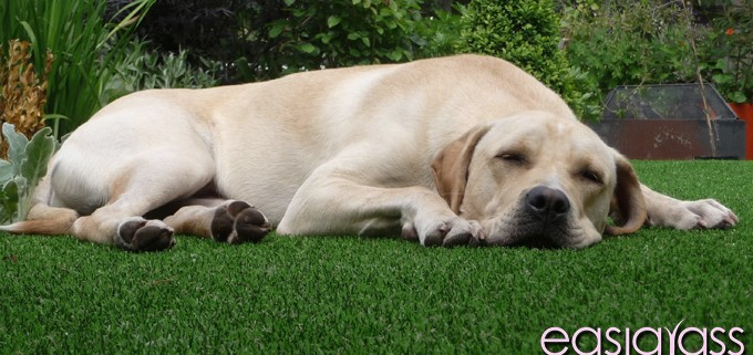 artificial-grass-lawn-maintenance-dubai