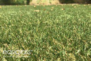installing artificial grass step 18